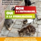 campagne stérilisation des chats