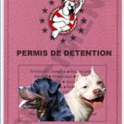 Permis détention chien